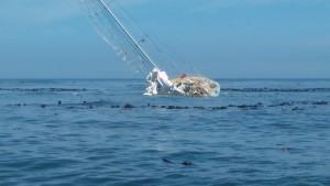 Båten Greenings vid stranden mellan Godahoppsudden och Cape Point. Bild: Clipper Ventures