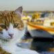 Räddade katter från brinnande fiskebåt