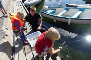 Tack vare traditionen med krabbrace, catch and release, är tillgången på krabbor god i hamnen. Bild: Linda Hammarberg