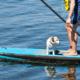 Paddla ståbräda med din hund