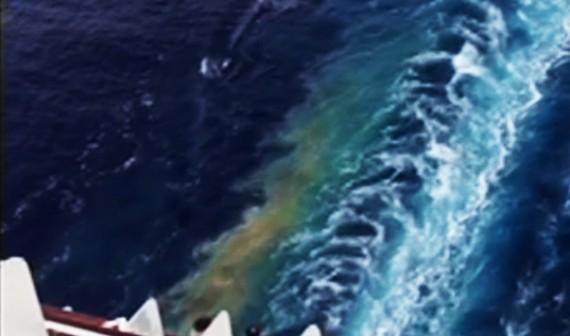 Svartvatten från kryssningsfartyg